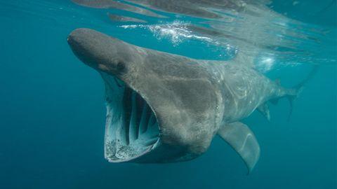 Hai in Dänemark gesichtet