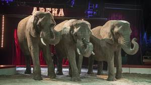 """Drei Elefanten stehen in einer Zirkus-Arena. Über ihnen leuchtet der Schriftzug """"Arena"""""""