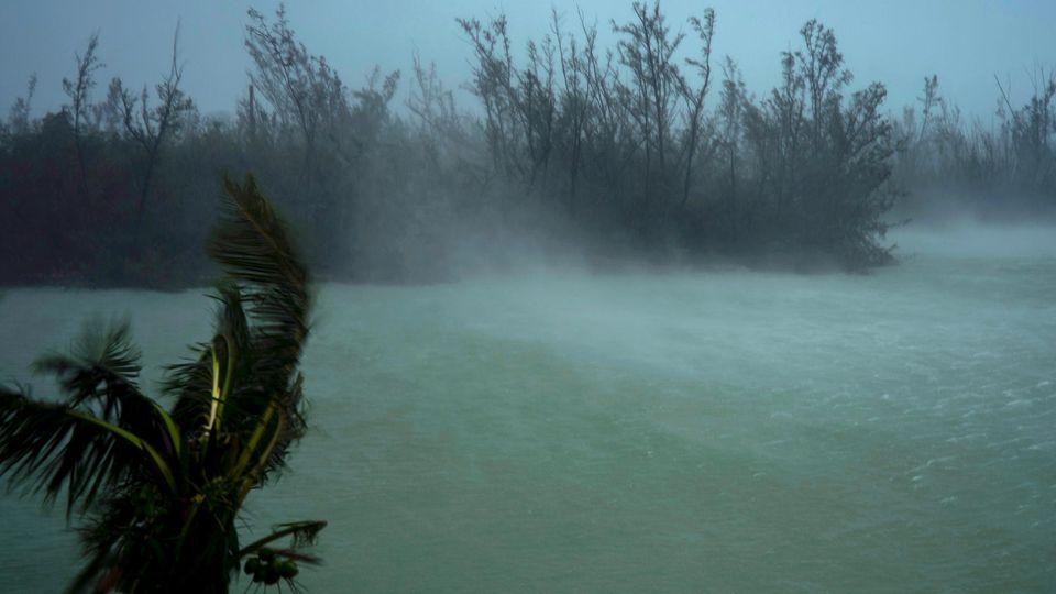 Sturmböen von Hurrikan Dorian peitschen die Baumspitzen und wirbeln das Wasser auf