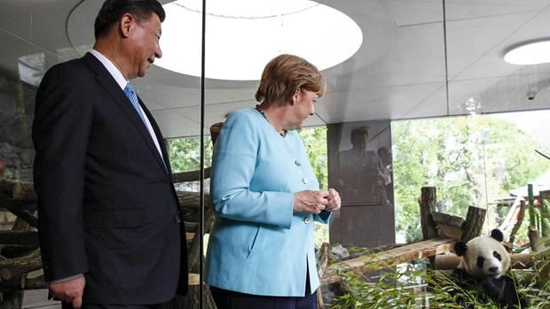 Um süße Tiere, wie hier bei der Einweihung eines Teils des Panda-Geheges im Berliner Zoo im Sommer 2017, wird es bei Angela Merkels Reise diesmal wohl nicht gehen. Links im Bild ist Chinas Staatspräsident Xi Jinping.