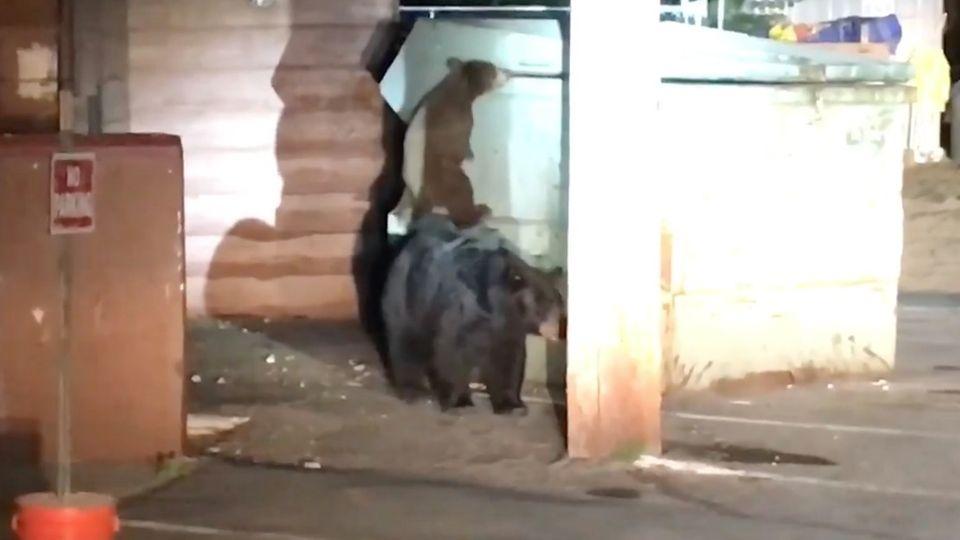 Geschwisterchen versucht jungen Bären zu retten