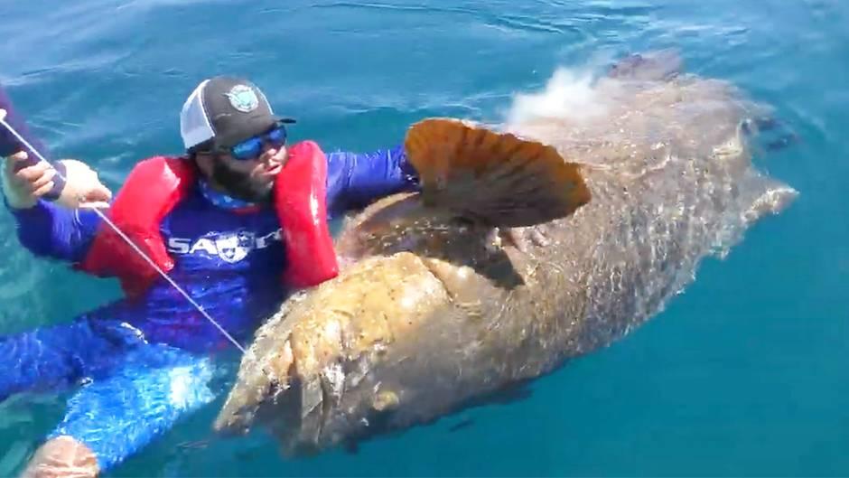 Angelnder Nichtschwimmer geht mit Riesenfisch baden