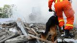 Ehrenamt - Spürhunde suchen in Trümmern nach Verschütteten
