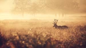 Hirsch auf einer Wiese