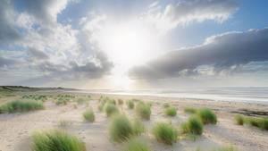 Strand von Nieblum