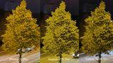 Dasselbe Bild, nun noch einmal digital vergrößert. Nun erkennt man, wie groß der Unterschied in puncto Details ist. Dabei achte man sowohl auf den Baum im Vorder- als auch das Hochhaus im Hintergrund. Interessantes Detail: Der Straßenbelag sieht auf jedem Bild anders aus.