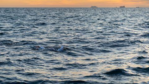 Ärmelkanal Schwimmerin