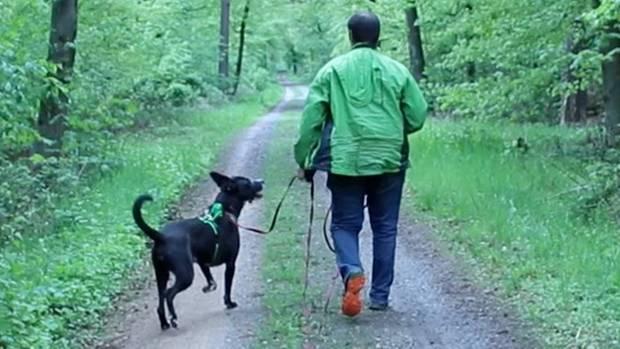Zoophilie: Torben liebt seinen Hund, aber ist es wirklich Liebe?