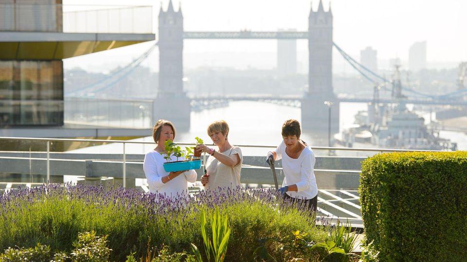Drei Frauen bepflanzen mitten in London einen Dachgarten.