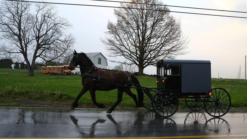 Eine Amish-Kutsche mit Pferd