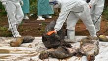 Ratchaburi, Thailand. Der Tempel mit seinen 150 sibirischen Tigern war eine Touristenattraktion, aber umstritten. Fast 90 der dort gehaltenen Tiere waren jüngst verendet, Behörden haben die Aufzuchtstation geschlossen und untersuchen nun, woran die seltenen Großkatzen gestorben sind.