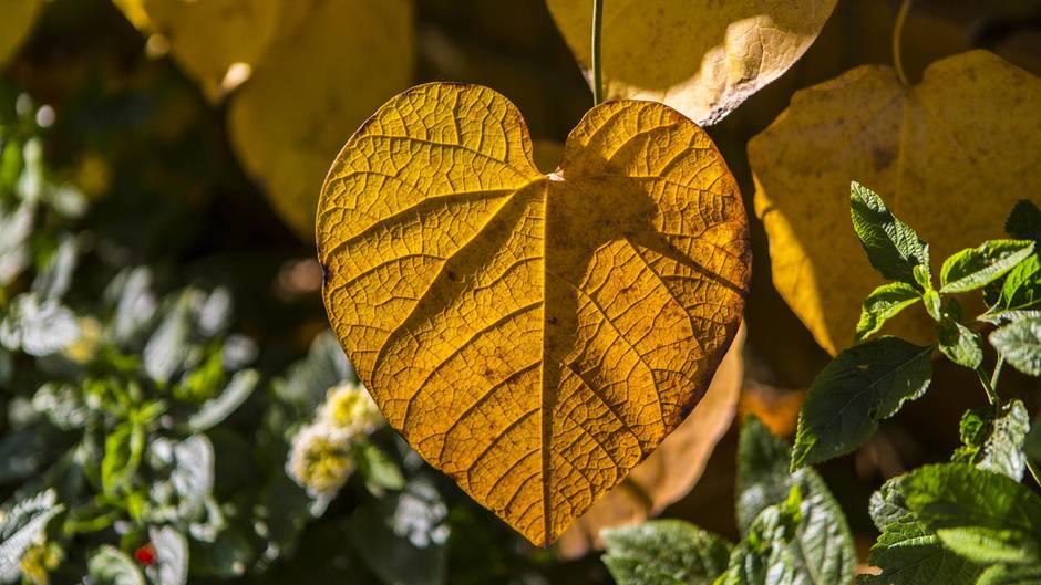 Herbstanfang 2019