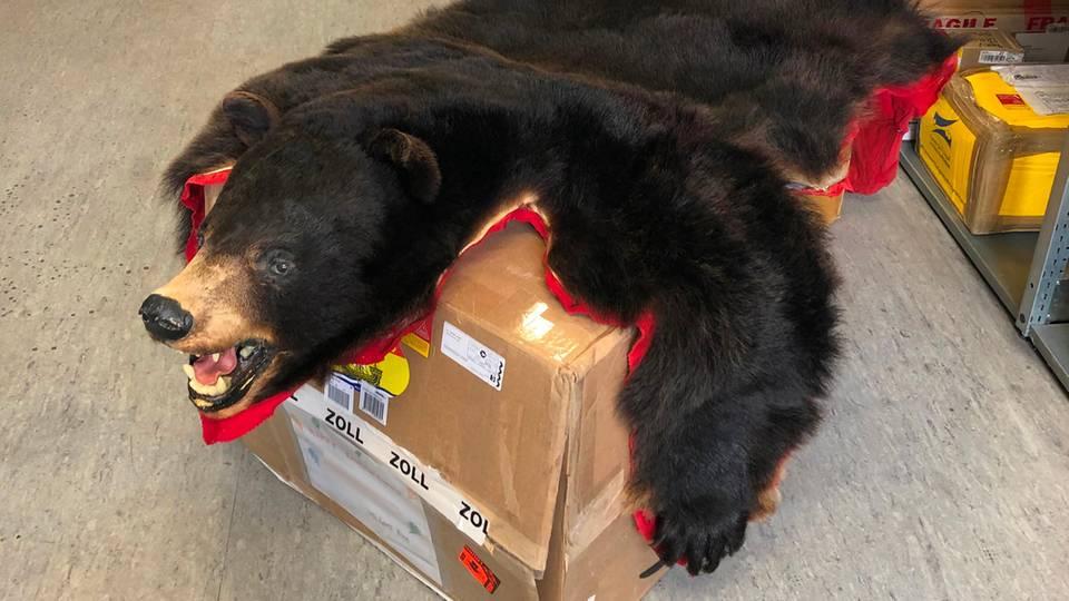 Ein Schwarzbärenfell liegt beim Hauptzollamt Wolfsburg