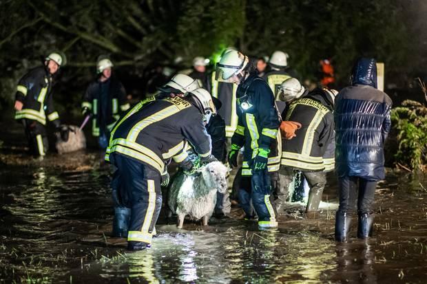 Mit einem Großaufgebot rettet die Feuerwehr etwa 300 Schafe von einer Weide in Dortmund