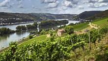 Weingebiet Rheingau: 15 Hektar zwischen Welterbe und Reben