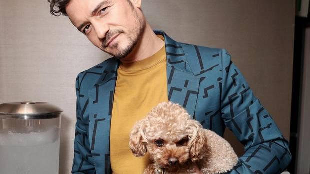 Orlando Bloom mit Hund