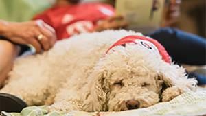 Lesehund im Unterricht: Kinder lesen Hunden vor und beide profitieren