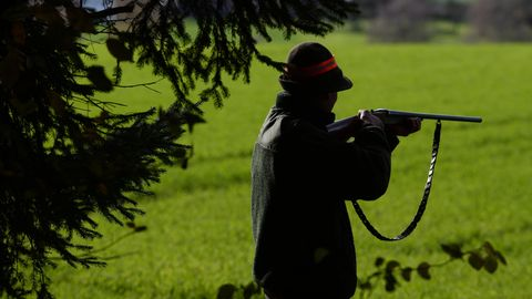 Ein Jäger hatte gedroht, zwei Hunde zu erschießen - und tat es schließlich auch (Symbolbild)
