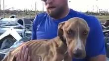 """Auf den Bahamas wurden bei Evakuierungen für Hurrikan """"Dorian"""" auch viele Hunde zurückgelassen."""