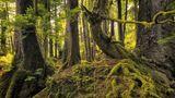Der Regenwald auf dem Archipel Haida Gwaii