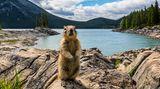 Ein nordamerikanisches Erdhörnchen