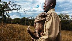 Ein Betreuer hält einen Pangolin