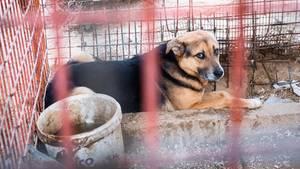 Gaza: Protokoll der Befreiung zweier Hunde aus dem Rafah-Zoo