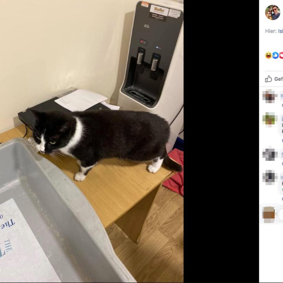Blinder Passagier: Ein Paar wird an der Flughafen-Security aufgehalten – weil seine Katze im Koffer sitzt