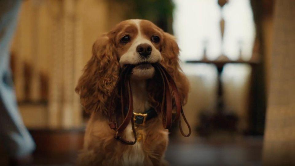 """Im neuen Film """"Susi und Strolch"""" werden die Rollen von realen Tieren und Menschen gespielt."""