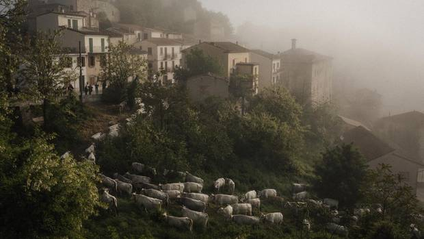 Schafe grasen auf einer Weide in Castropignano