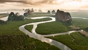 Mangrovenwälder in der Bucht von Phang Nga, Thailand