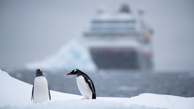 Kurs Antarktis: Zwei Pinguine und ein Kreuzfahrtschiff begegnen sichin der Wlhelmina-Bay