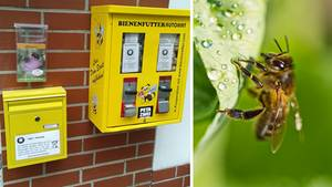 Ein Bienenfutterautomat hängt an einer Hausfassade in Dortmund