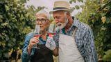 Paar testet Wein