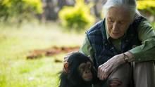 Affenforscherin Jane Goodall