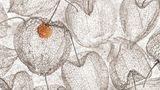 "Die Belgierin Chrstl Deckx schoss das Foto ""Red Dot"": Es zeigt einige leere Physalis."