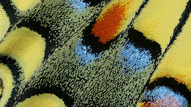 """""""Woven"""" heißt das Bild voN Hasan Baglar aus Zypern und erinnert in der Makroansicht an einen gewebten Wandteppich"""