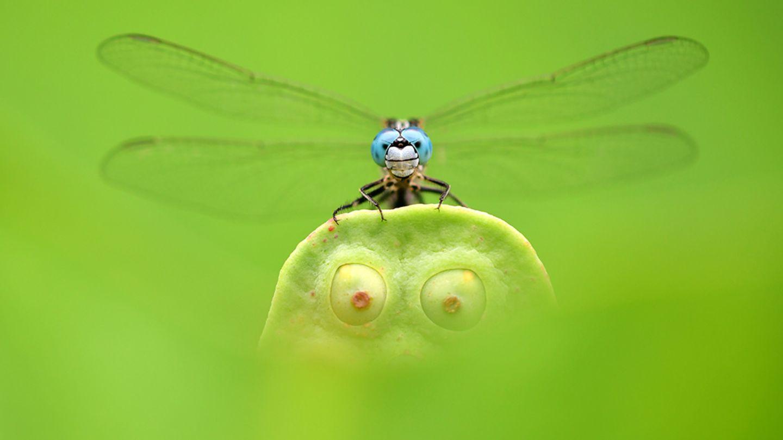 Das Foto von Minghui Yuan aus China zeigt eine Libelle, die auf einem Lotus-Blatt ruht.