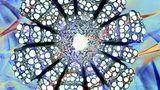 """""""Deutzia & Clematis"""" vom Iren Steve Lowry zeigt den Querschnitt eines Clematis-Sterns"""