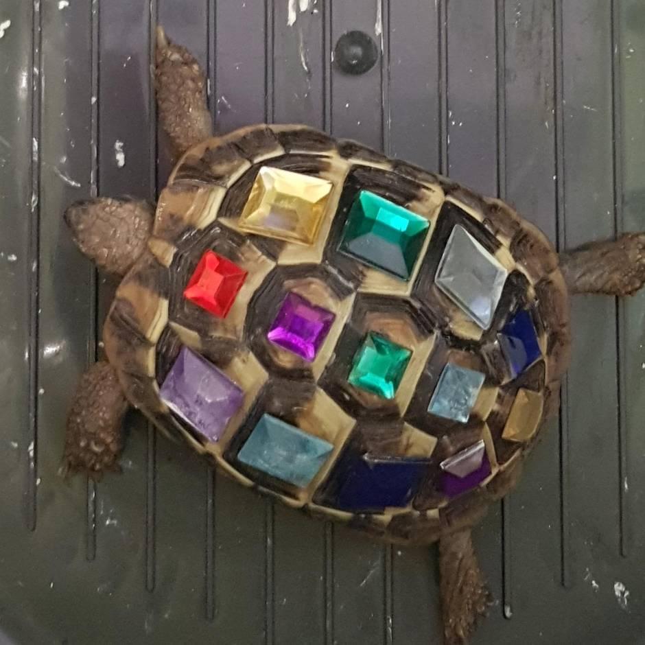 Nachrichten aus Deutschland: Polizei schnappt Metalldieb und findet Schildkröte mit Schmucksteinen