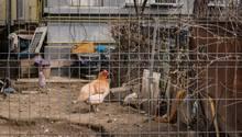 Im Haus in Florida fanden sich neben Müll und Gerümpel 245 Tiere