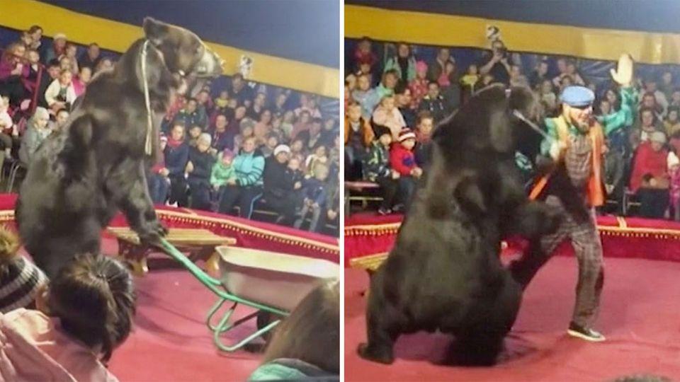 Russland: Zirkus-Bär attackiert Dompteur und springt dann ins Publikum