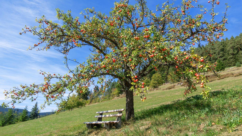 L wie lokale Lokale  Der Apfel fällt nicht weit vom Stamm. Und wer diesen auch im Urlaub auf lokalen Märkten kauft und in lokalen Lokalen lokale Spezialitäten schlemmt, isst und ist nachhaltig. Denn kurze Transportwege verursachen einen deutlich geringeren CO2 -Ausstoß.