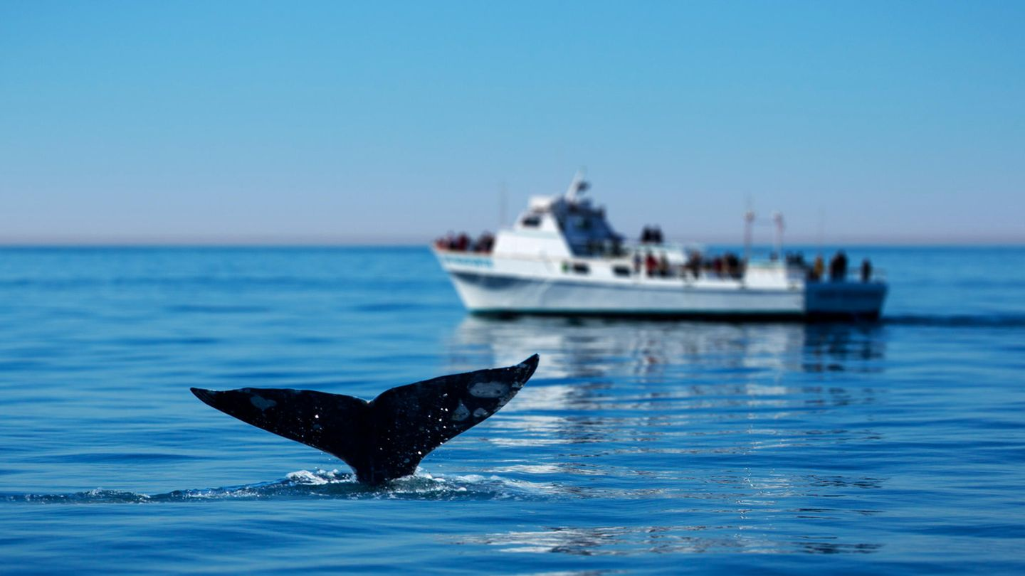 Whale-Watching