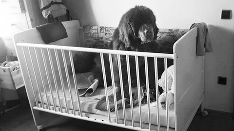 Hündin Emily in einem Kinderbett