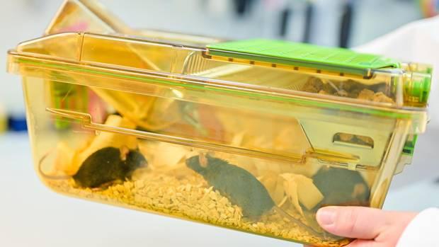 Eine Mitarbeiterin hält einen geschlossenen Behälter mit Mäusen in einem Labor in den Händen