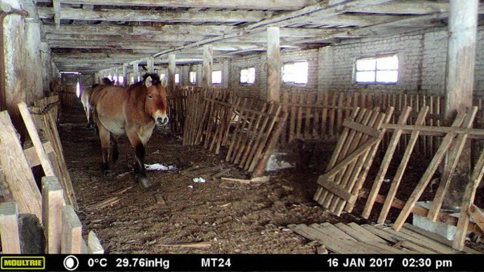 Das Forscherteam hofft, in Zukunft auch im ukrainischen Teil der Zone Kameras installieren zu dürfen.