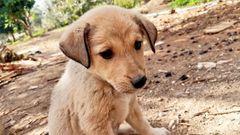 grüner hundewelpe