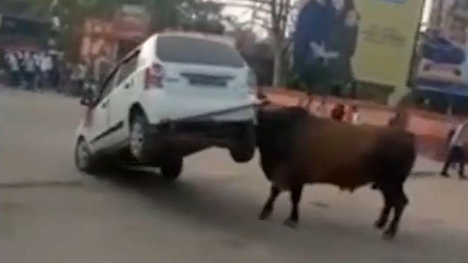 Dieser Bulle in Nordindien nimmt ein Auto auf die Hörner.