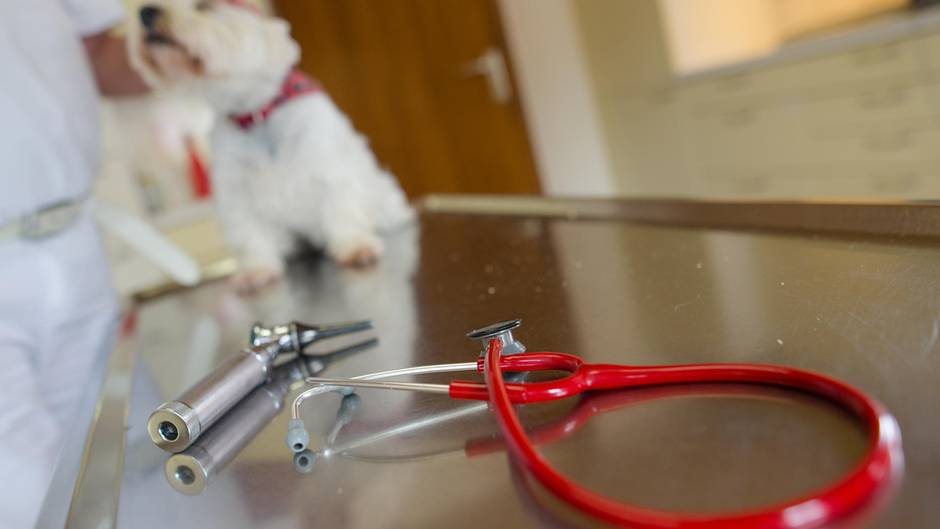 Ein Hund beim Tierarzt (Archivbild)